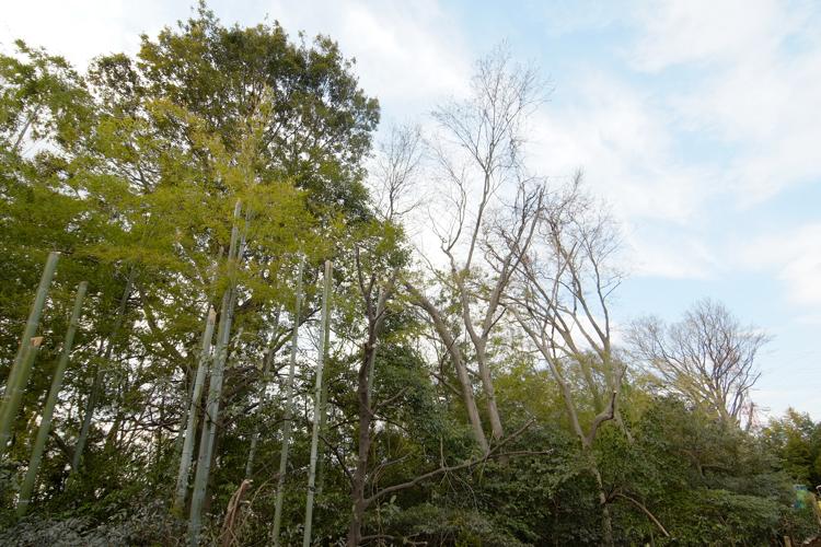 大倉山駅の賃貸:【桜並木の散歩道。】
